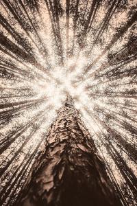Jeudi Philo : Nature & Philosophie